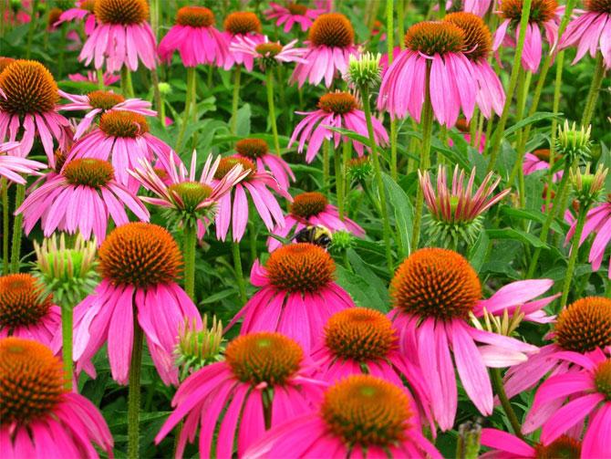 1 عکسهایی از گلهای بسیار زیبای بهاری