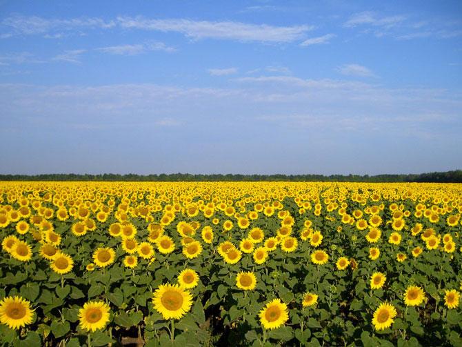 10 عکسهایی از گلهای بسیار زیبای بهاری