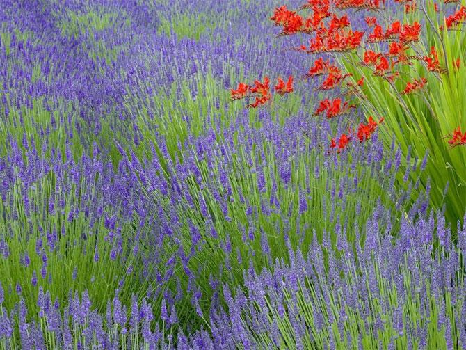11 عکسهایی از گلهای بسیار زیبای بهاری