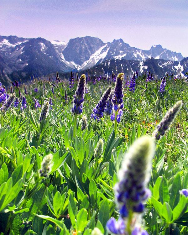 12 عکسهایی از گلهای بسیار زیبای بهاری