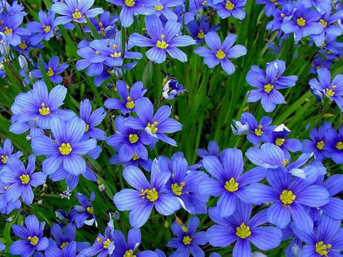 2 عکسهایی از گلهای بسیار زیبای بهاری