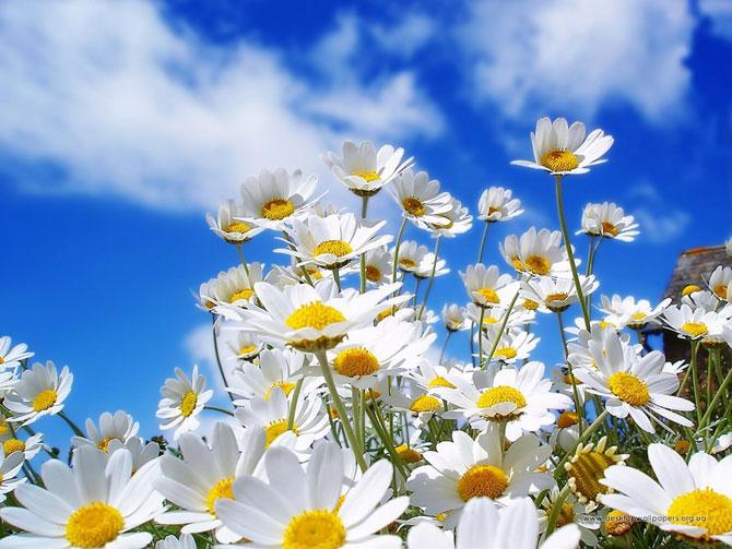 4 عکسهایی از گلهای بسیار زیبای بهاری