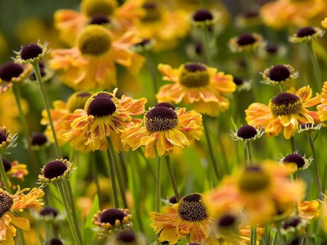 5 عکسهایی از گلهای بسیار زیبای بهاری