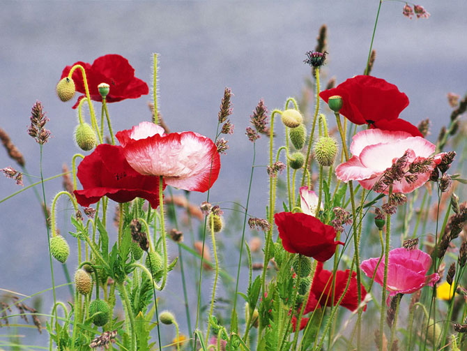 6 عکسهایی از گلهای بسیار زیبای بهاری
