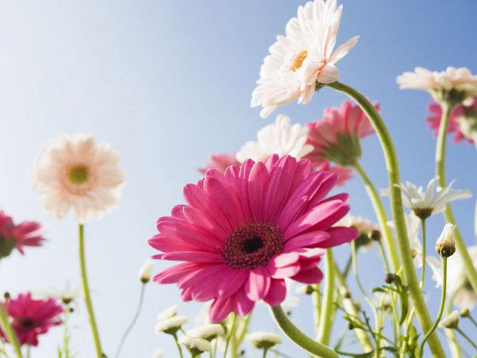 7 عکسهایی از گلهای بسیار زیبای بهاری