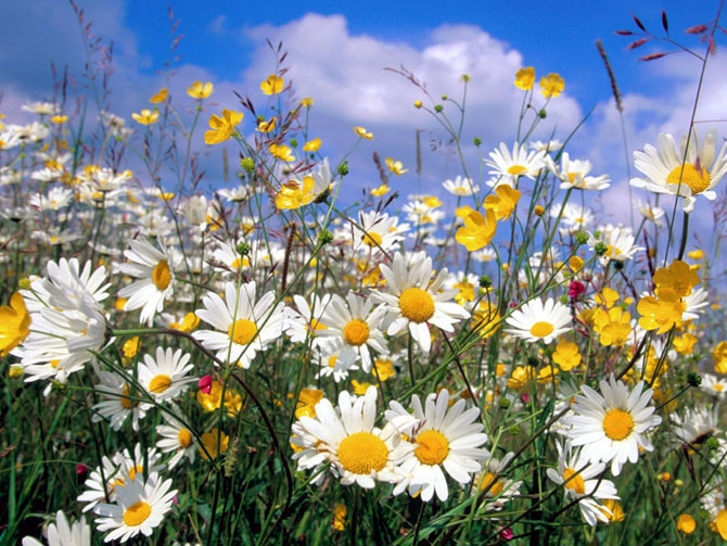 8 عکسهایی از گلهای بسیار زیبای بهاری