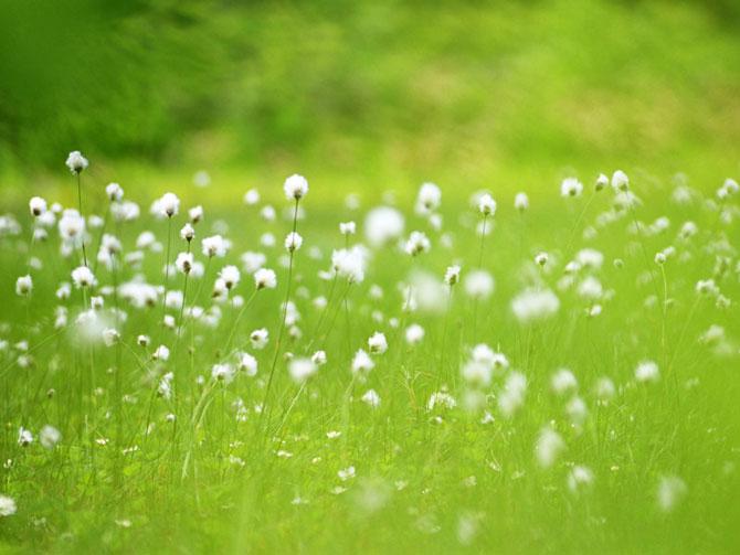9 عکسهایی از گلهای بسیار زیبای بهاری