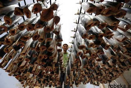 03 17 01 عکس های جالب و دیدنی روز چهارشنبه 23 خرداد 97
