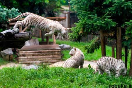 03 19 08 عکس های جالب و دیدنی روزیکشنبه 27 خرداد 97