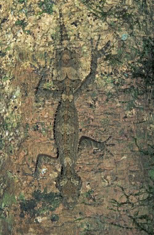 1579354494 robeka.ir تصاویری دیدنی از استتار حیوانات و جانوران جنگل