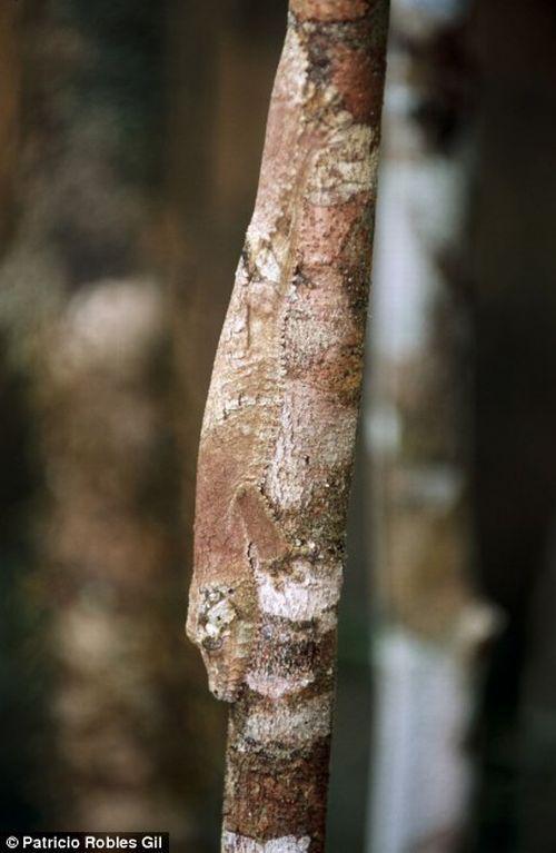 تصاویری دیدنی و ناب از استتار حیوانات و جانوران جنگل