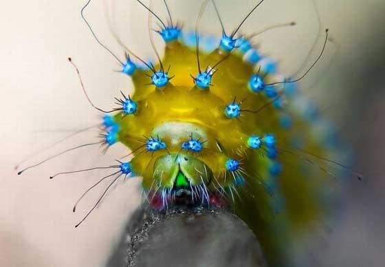 1579358893 robeka.ir عکسهایی از عجیب ترین خزندگان دنیا