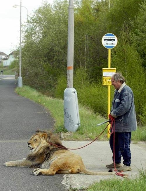 1579359914 robeka.ir عکسهایی از حیوانات خانگی بسیار عجیب و غریب