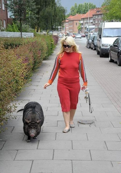 1579359924 robeka.ir عکسهایی از حیوانات خانگی بسیار عجیب و غریب
