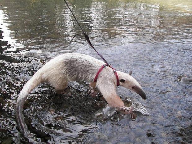1579359925 robeka.ir عکسهایی از حیوانات خانگی بسیار عجیب و غریب