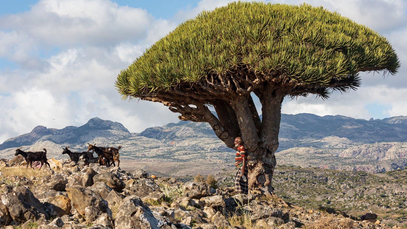 1608440917 robeka.ir از درخت خون اژدها در یمن تا حفرهای عجیب که نام اداره پست را یدک میکشد + عکس