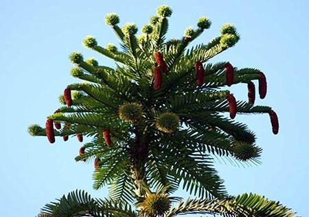1609448879 robeka.ir عجیب ترین درختان دنیا + عکس