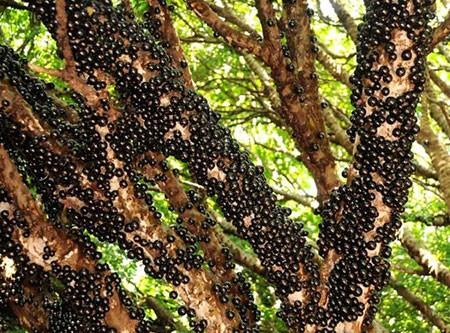 1609448886 robeka.ir عجیب ترین درختان دنیا + عکس