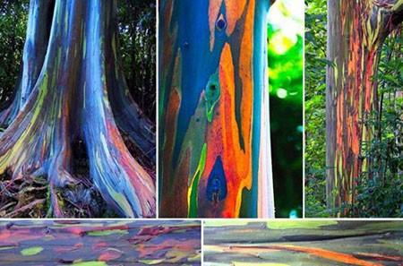 1609448897 robeka.ir عجیب ترین درختان دنیا + عکس