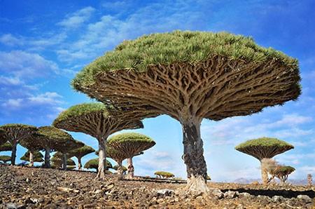 1609448900 robeka.ir عجیب ترین درختان دنیا + عکس