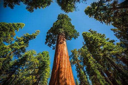 1609448910 robeka.ir عجیب ترین درختان دنیا + عکس