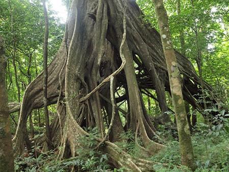 1609448917 robeka.ir عجیب ترین درختان دنیا + عکس