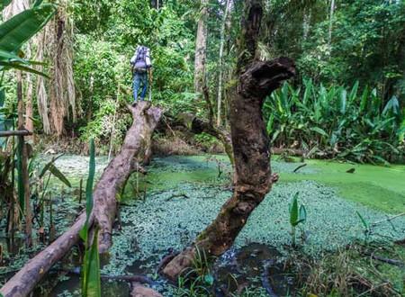 1609537060 robeka.ir پارک ملی مادیدی، پارکی که میتواند انسان را فلج کند!