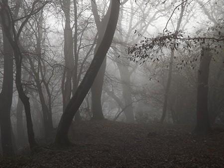 1609537116 robeka.ir جنگل جیغ از مکانهای ترسناک انگلستان (+تصاویر)