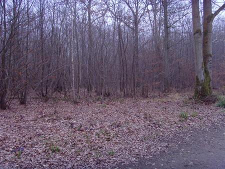 1609537119 robeka.ir جنگل جیغ از مکانهای ترسناک انگلستان (+تصاویر)