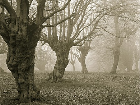 1609537122 robeka.ir جنگل جیغ از مکانهای ترسناک انگلستان (+تصاویر)