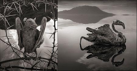 1609537131 robeka.ir دریاچه ناترون، دریاچه ای اسرارآمیز در آفریقا