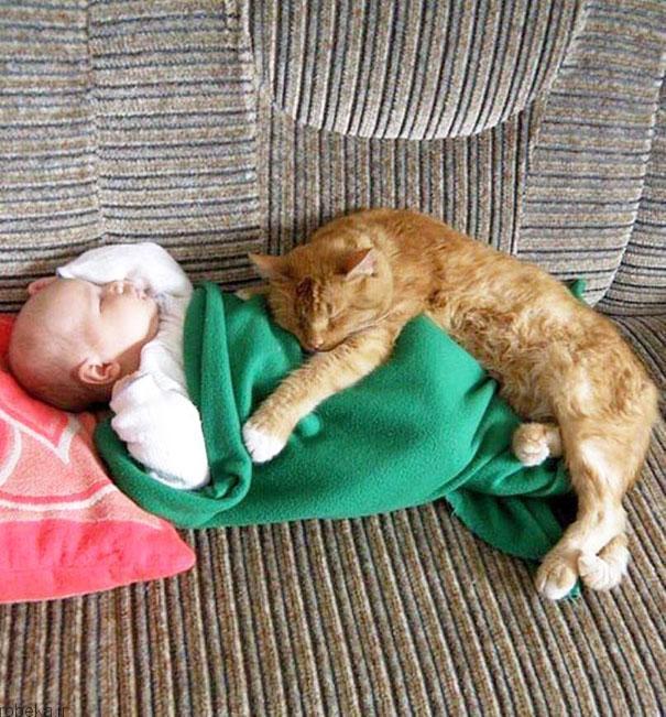 2017532314196285a عکس های دیدنی از رابطه احساسی گربه ها و کودکان