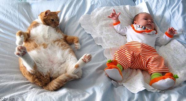 20175323141967016a عکس های دیدنی از رابطه احساسی گربه ها و کودکان