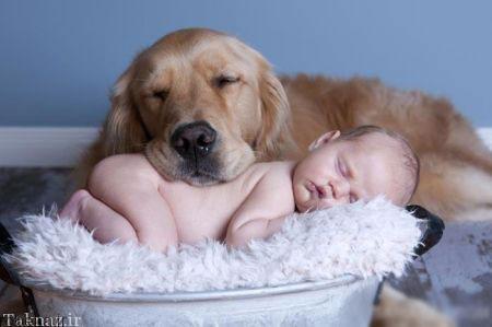 20175323230712614a عکسهای عاشقانه از رابطه انسان با حیوانات
