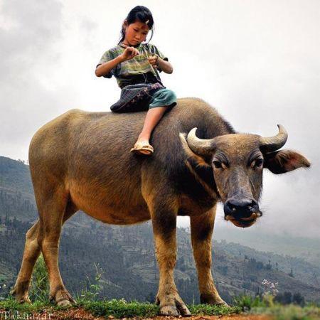 20175323230713618a عکسهای عاشقانه از رابطه انسان با حیوانات