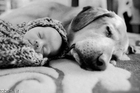 20175323230718119a عکسهای عاشقانه از رابطه انسان با حیوانات