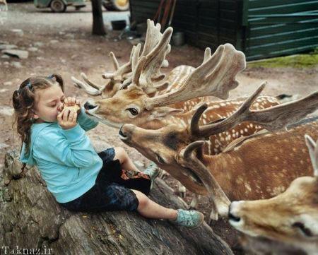 20175323230718411a عکسهای عاشقانه از رابطه انسان با حیوانات