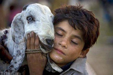 2017532323071874a عکسهای عاشقانه از رابطه انسان با حیوانات
