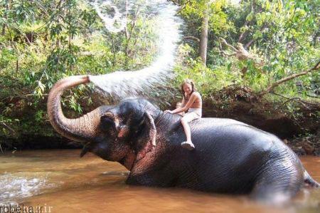 20175323230718921a عکسهای عاشقانه از رابطه انسان با حیوانات