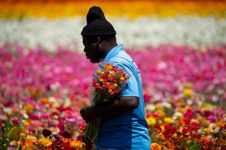 باغ گل کارلسبد 8 باغ گل کارلسبد در کالیفرنیا +تصاویر