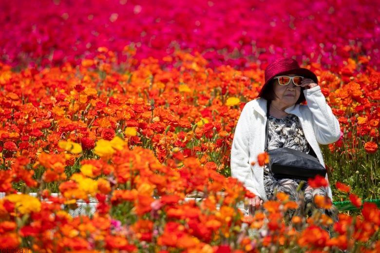 باغ گل کارلسبد باغ گل کارلسبد در کالیفرنیا +تصاویر