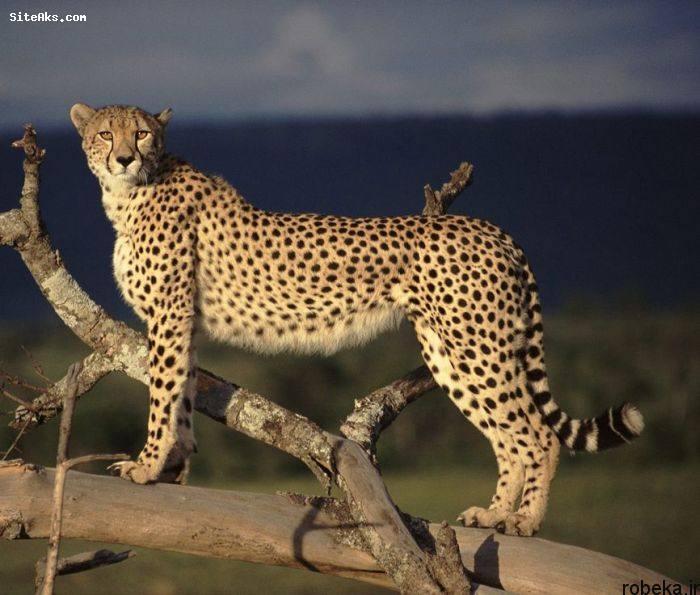 5b229dedce867 2015216193038810a عکس های حیوانات شگفت انگیز