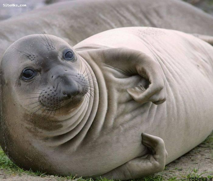 5b229e0e4b304 201521619317816a عکس های حیوانات شگفت انگیز