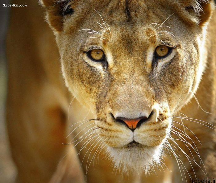 5b229e405c0b6 2015216193147225a عکس های حیوانات شگفت انگیز