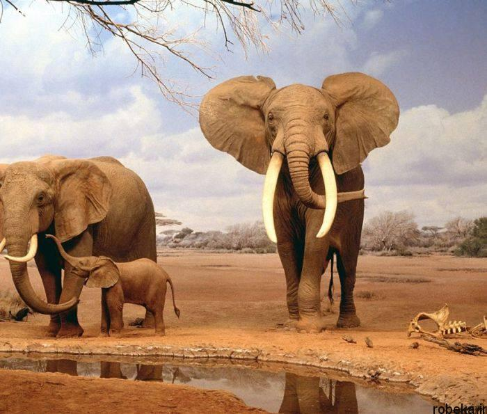 5b229e7888b22 20152161930361a عکس های حیوانات شگفت انگیز
