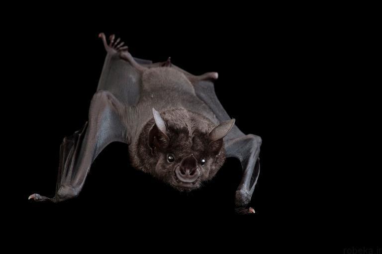 5b22a212f1b21 bat photos 14 16 عکس از خفاش های شگفت انگیز که پیش از این ندیده اید