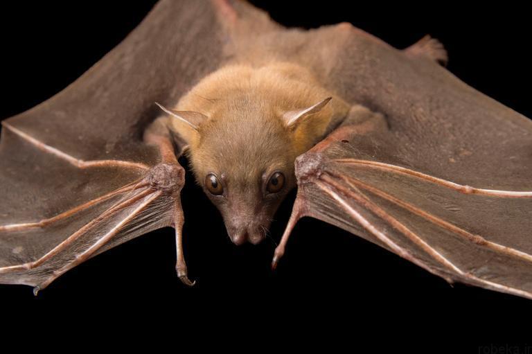 5b22a216f02d9 bat photos 15 16 عکس از خفاش های شگفت انگیز که پیش از این ندیده اید