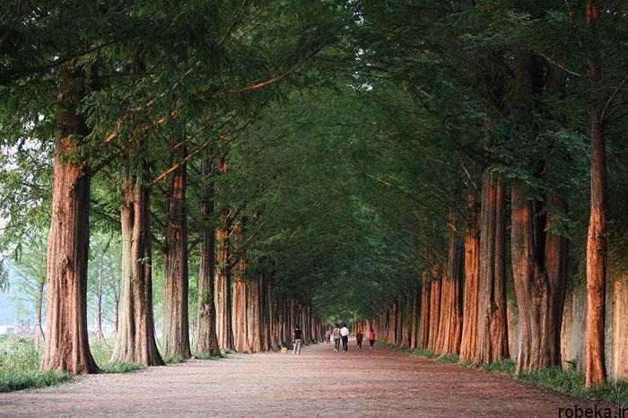 5b2678d6d1a59 south korea nature photos 19 عکس هایی از طبیعت زیبا و مکان های دیدنی کره جنوبی