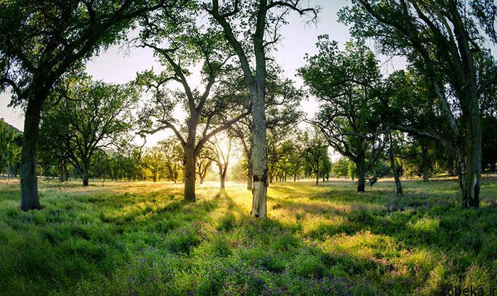 5b282c1ddd1ff beautiful relax nature photos 4 20 عکس های آرامش بخش و آرامش دهنده از طبیعت