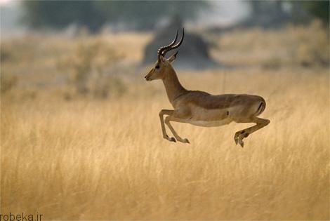 83 عکس از حیوانات رکورد دار ! جالب و باور نکردنی!